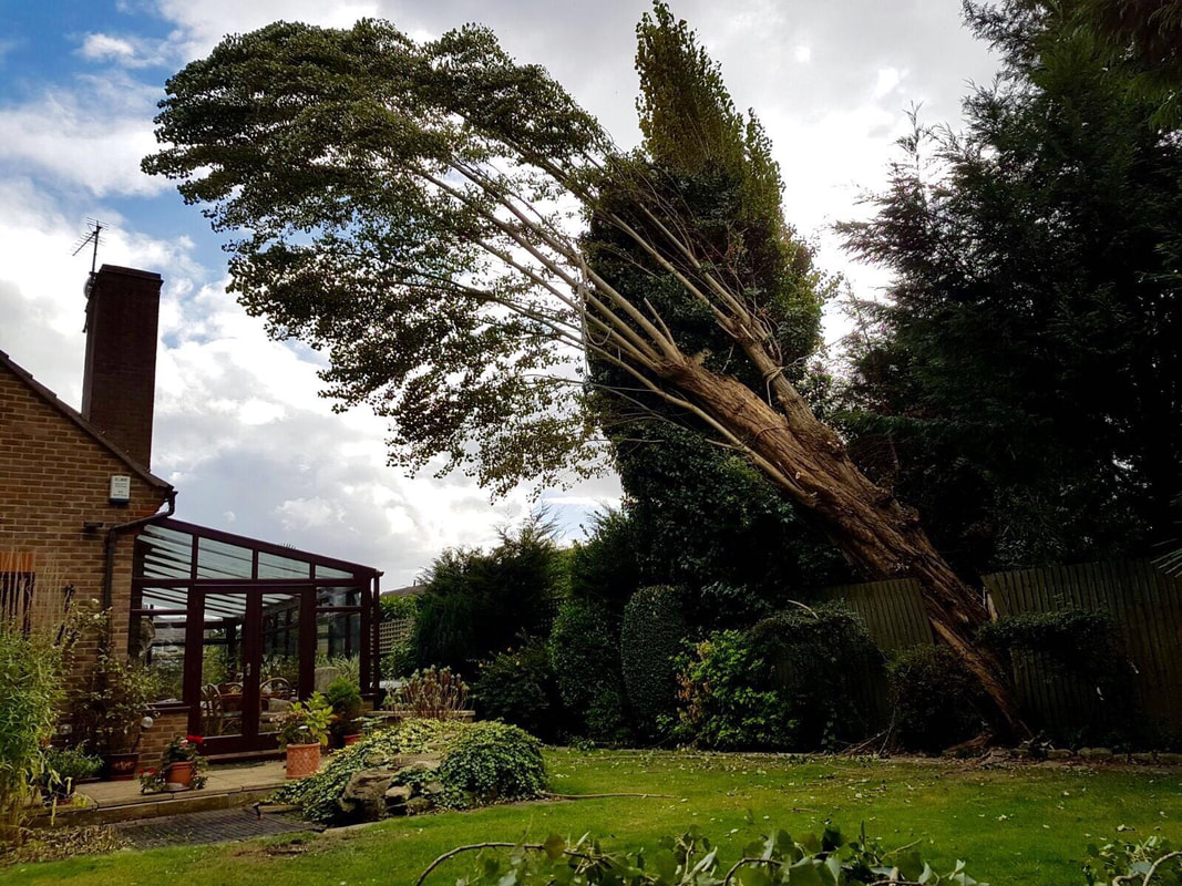tree-surgeon-Altrincham-1