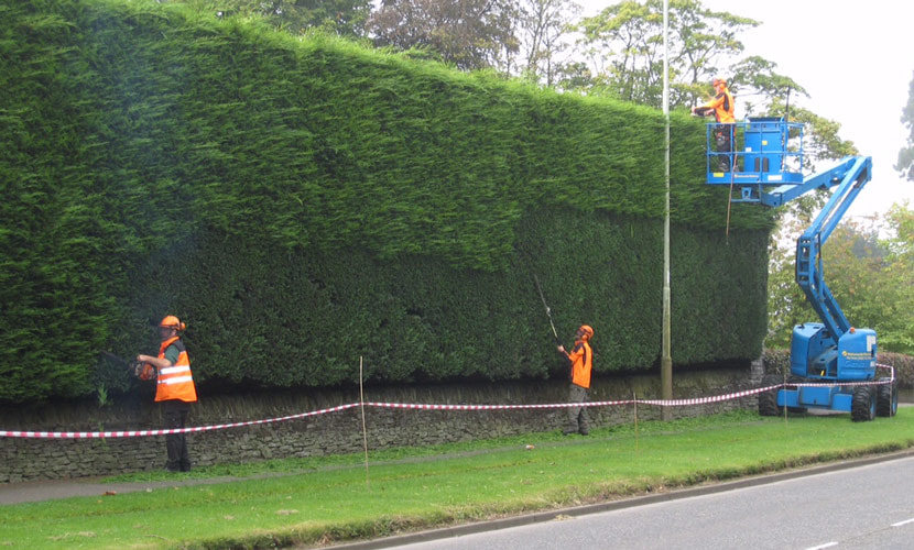 hedge-trimming-Altrincham