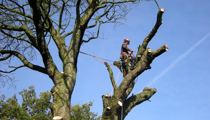 tree-surgeon-Altrincham
